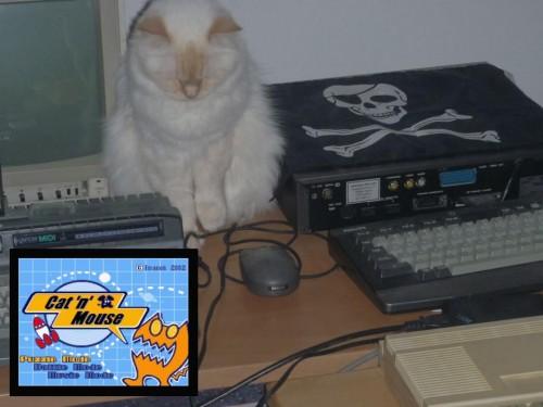 Catn_Mouse.jpg
